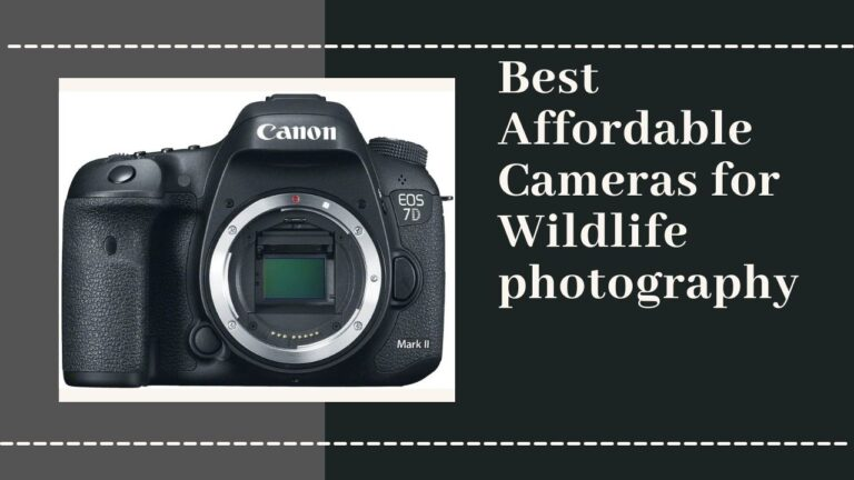 7 Best Affordable Cameras for Wildlife Photography